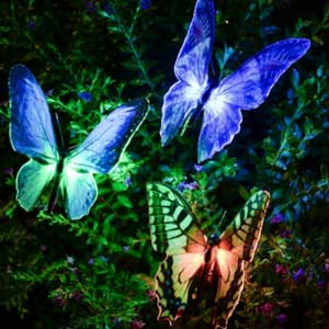 Solar Butterfly Lights
